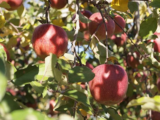 apple03